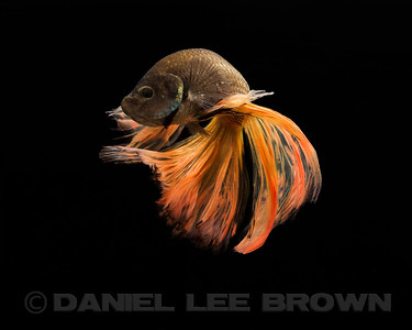 BETTA024_SAC_CO_CA_2017-07-11_D01_25_6677