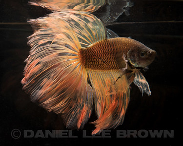 BETTA024_SAC_CO_CA_2017-07-11_D01_25_6608