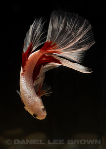 BETTA010_SAC_CO_CA_2017-07-04_D01_25_4392