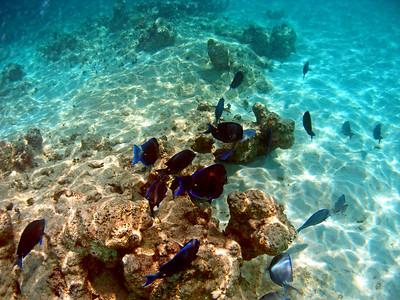 Anegada Snorkel Loblolly Bay 2007 Sept. 19 morning