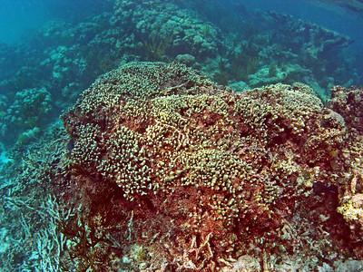 Anegada Loblolly Bay Snorkel 2007 Sept. 20 Afternoon