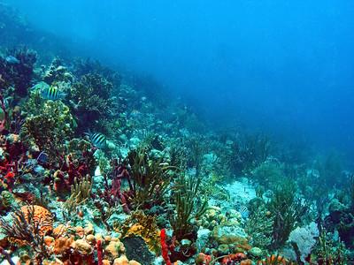 Tortola Marina Cay Diamond Reef Scuba