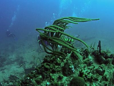 BVI Virgin Gorda Scuba & Snorkel The Wreck of the Rhone with DiveBVI