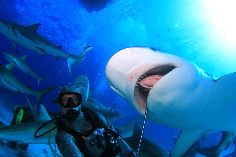 Shark taking a Grouper head in Nassau, Bahamas - February 2017 (image taken by Stuart Coves)