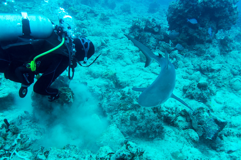 """Caribbean Reef Shark taking an interest in dive leader's actions at """"Mike's Dive"""" site in Nassau, Bahamas - February 2017"""