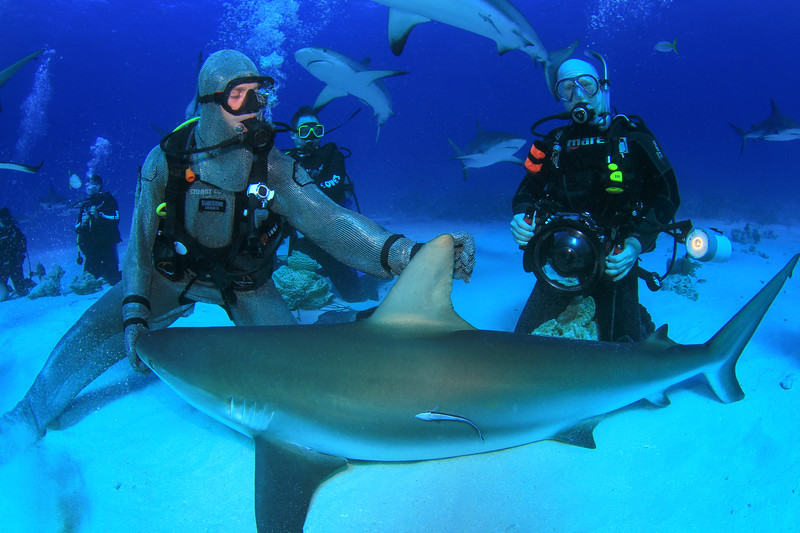Shark feeder with shark in trance along with me and my huge underwater photography outfit!  Nassau, Bahamas - February 2017 (image taken by Stuart Coves)