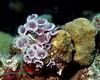 """Reef """"Flowers"""""""