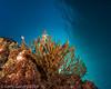 Backlit reef seen