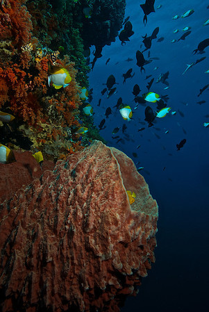Banda Islands Indonesia