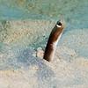 Margintail Conger Eel
