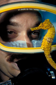 Mikey's Friend Mike Mesgleski poses with a Common Seahorse in the Bay Islands of Honduras.  1992 Beneath The Sea International Imaging Competition - Third Place, Marine Life http://www.beneaththesea.org/contest.html 1992 New Jersey Council of Dive Clubs Underwater Photography Contest - Third Place, Macro