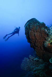 Rich Rubin hovers next to a huge Barrel Sponge in Roatan. Bay Islands, Honduras