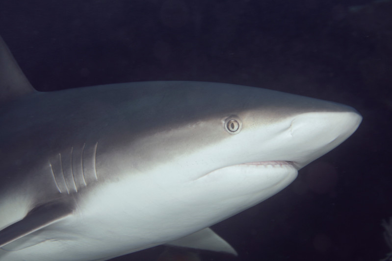 IMG_9284_Shark