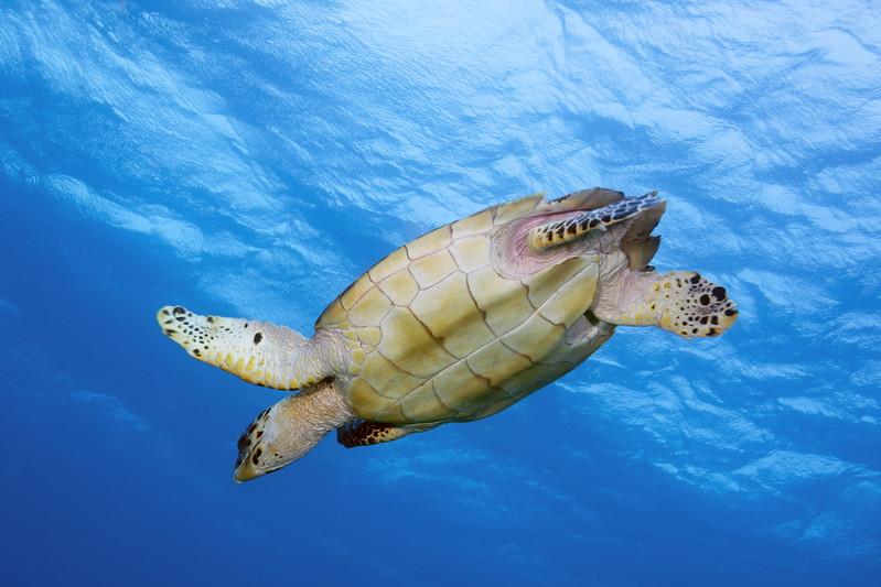 IMG_8590_Turtle