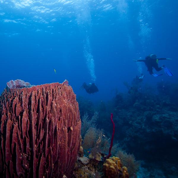 IMG_8200_Diver_Scene