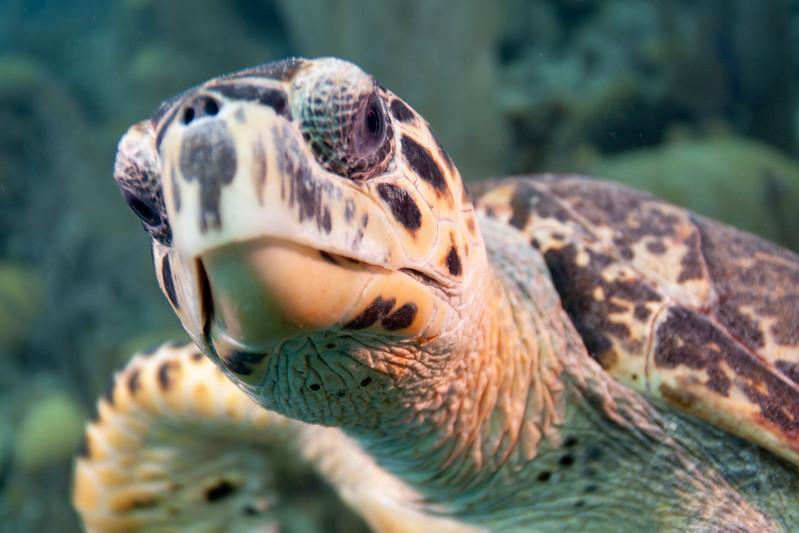 IMG_8540_Turtle
