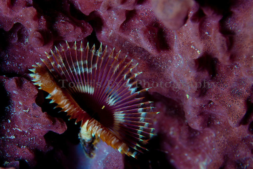 IMG_9779_Feather Duster