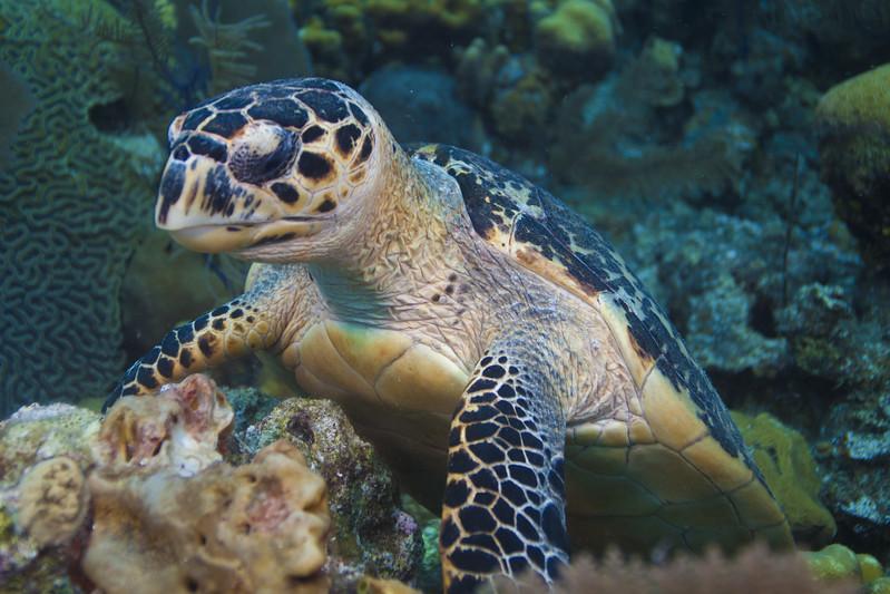 IMG_8535_Turtle