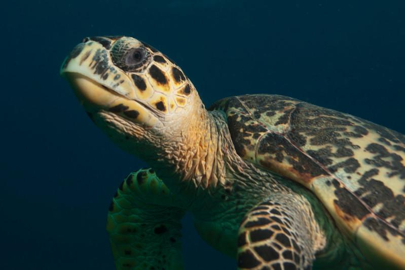 IMG_8595_Turtle