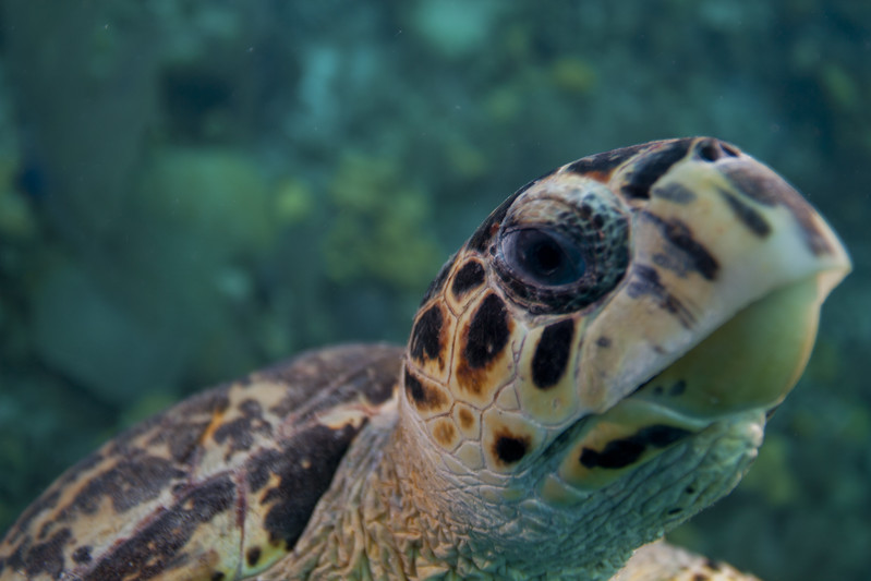 IMG_8548_Turtle