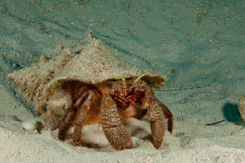 IMG_9325_Crab