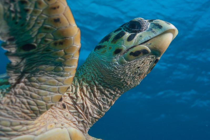 IMG_8597_Turtle