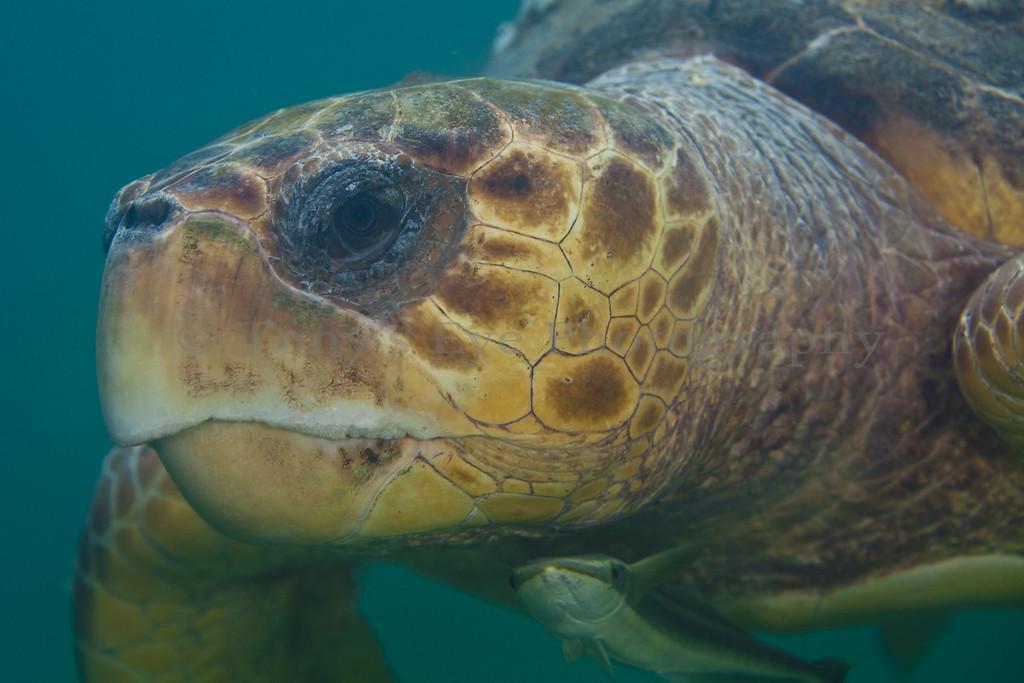 IMG_9826_Turtle_2