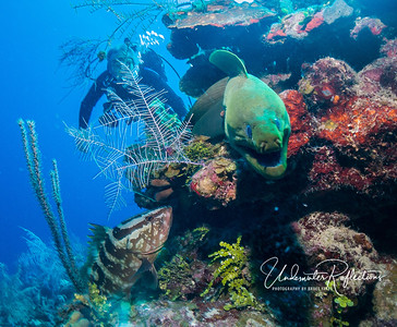 Nassau grouper, Luke, and moray eel