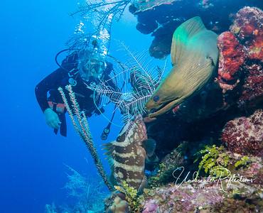 Nassau grouper, Luke, and moray eel