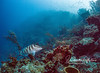 Jungle mist - reef with Nassau grouper