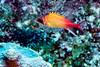 IMG_5116longjaw squirrelfish
