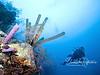 Sponges with diver