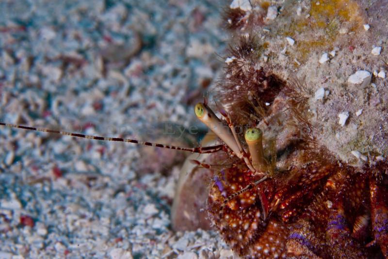 IMG_9854_Crab_2
