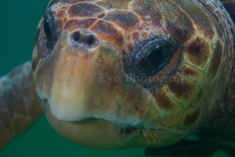 IMG_9828_Turtle