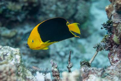 Friday Sandy Slope Dive