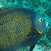 Parott Reef 2013-07-28 - 13-57-28