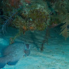 Hogfish Hollow 2013-07-25 - 15-25-43