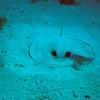 Long Caye Wll 2015-07-06 - 11-24-10