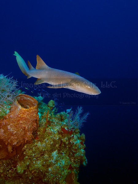 Long Caye Wall 2014-07-01 - 15-36-58