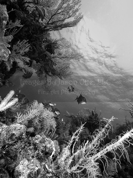 Hogfish Point  2014-07-01 - 11-11-51