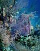 Azure Sponge Scene