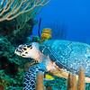 Southwater Caye Wall 2013-07-23 - 13-13-07