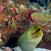 Mermaid 2011-10-09 - 14-18-44