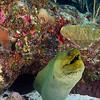 Mermaid 2011-10-09 - 14-18-44