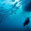 Stew Bakst photographs a large school of Jacks under the Belize Aggressor<br /> <br /> Lighthouse Reef, Belize