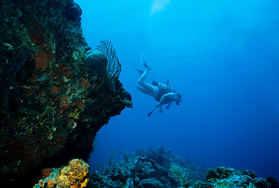 A diver explores the fantastically beautiful reefs of Bequia.  Bequia is the largest island in the island state of St. Vincent and the Grenadines. One of the Windward Islands, Bequia is popular with sailing enthusiasts from around the world.