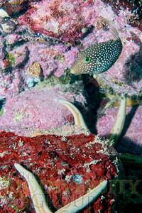 Biodiversity Group, DSC09003