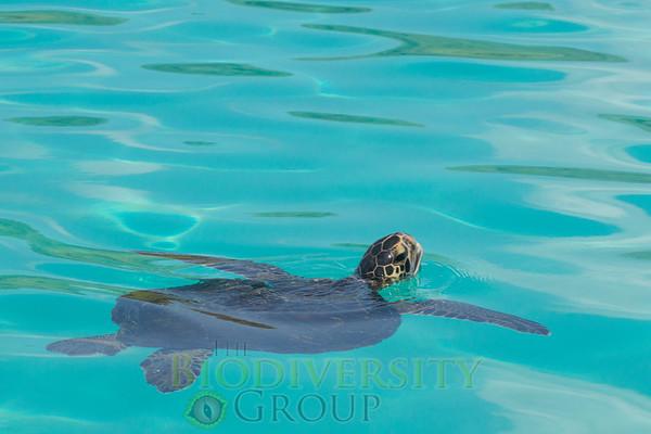 Biodiversity Group, _DSC6057
