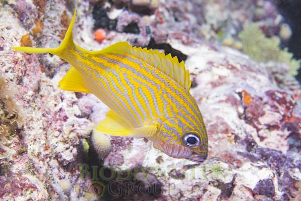 Biodiversity Group, DSC02365