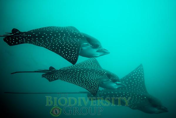 Biodiversity Group, DSC06267